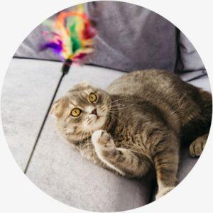 Voordelen cbd katten - Actieve kat