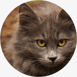 Voordelen CBD katten - Gezonde vacht en huid