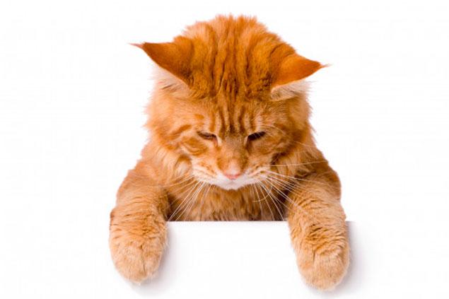 waarom cbd voor katten gebruiken