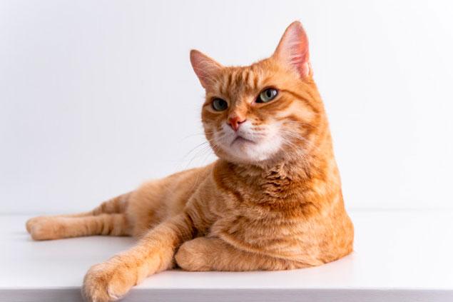 cbd voor katten waarom gebruiken