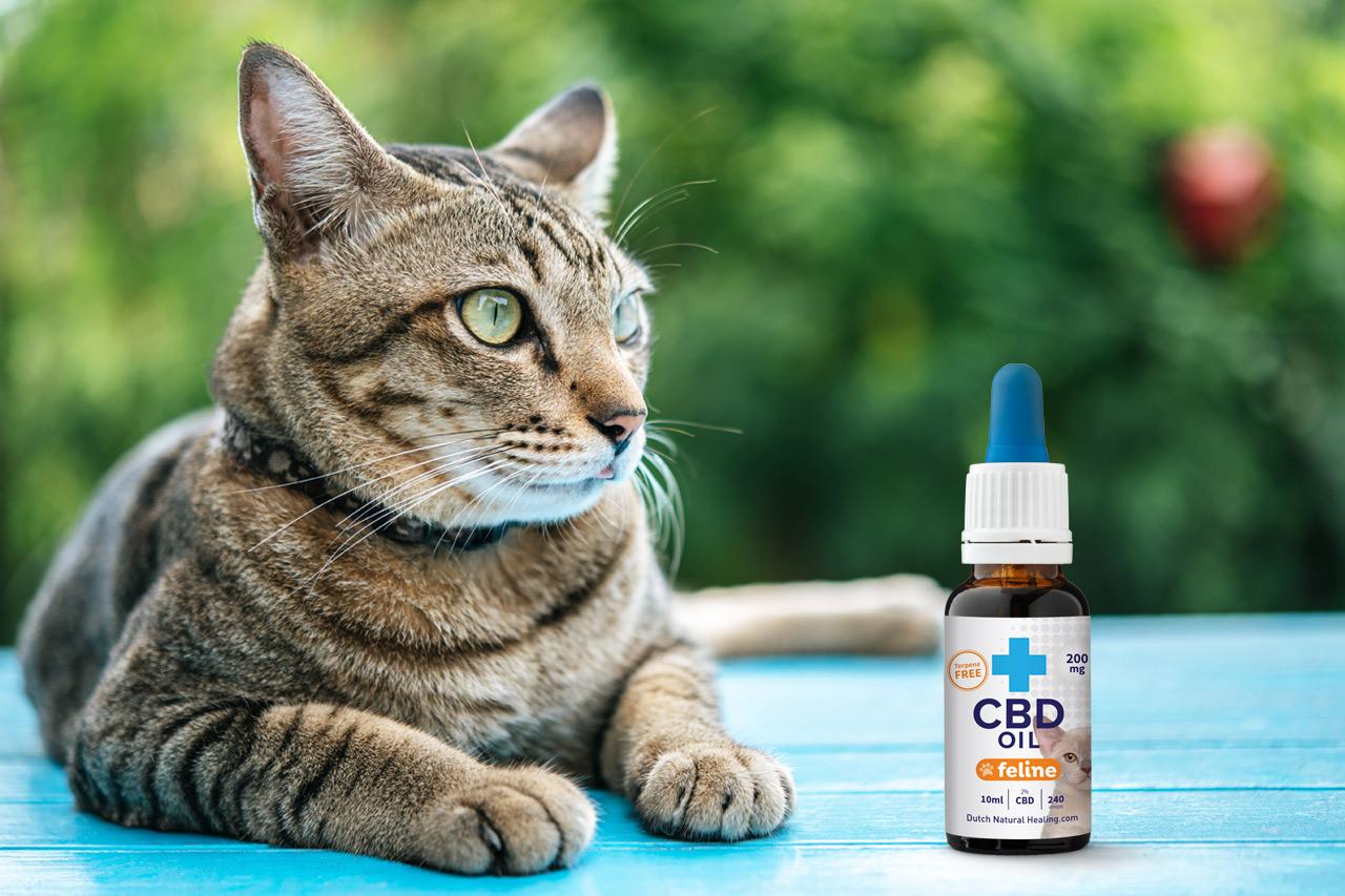 CBD Olie Katten ervaringen